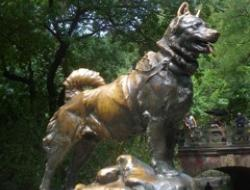 Balto was the lead dog on the final relay team. This picture of a statue of Balto in New York's Central Park honors all the dogs in the Great Race of Mercy.